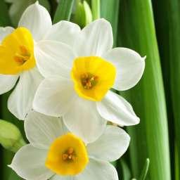 Угадайте весенние цветы по картинкам!